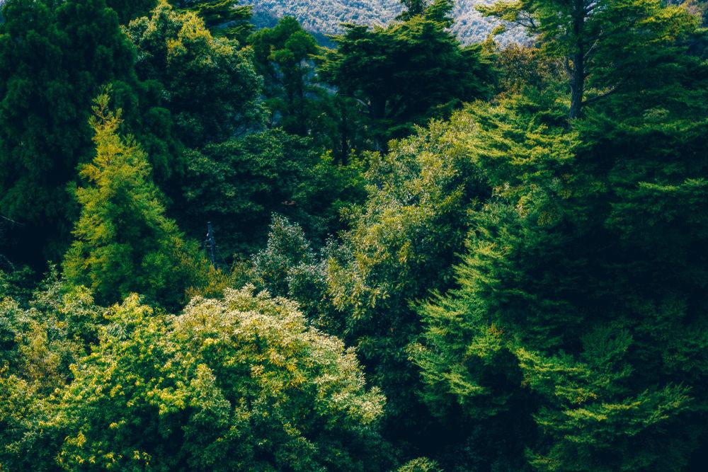 頂上からの森