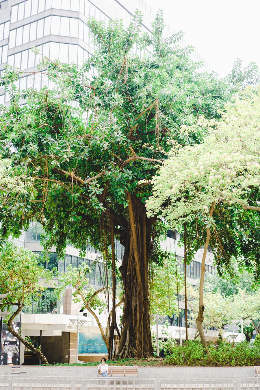 超巨大な木