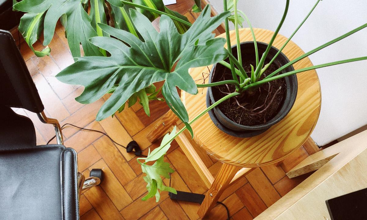 植物のディスプレイ用として