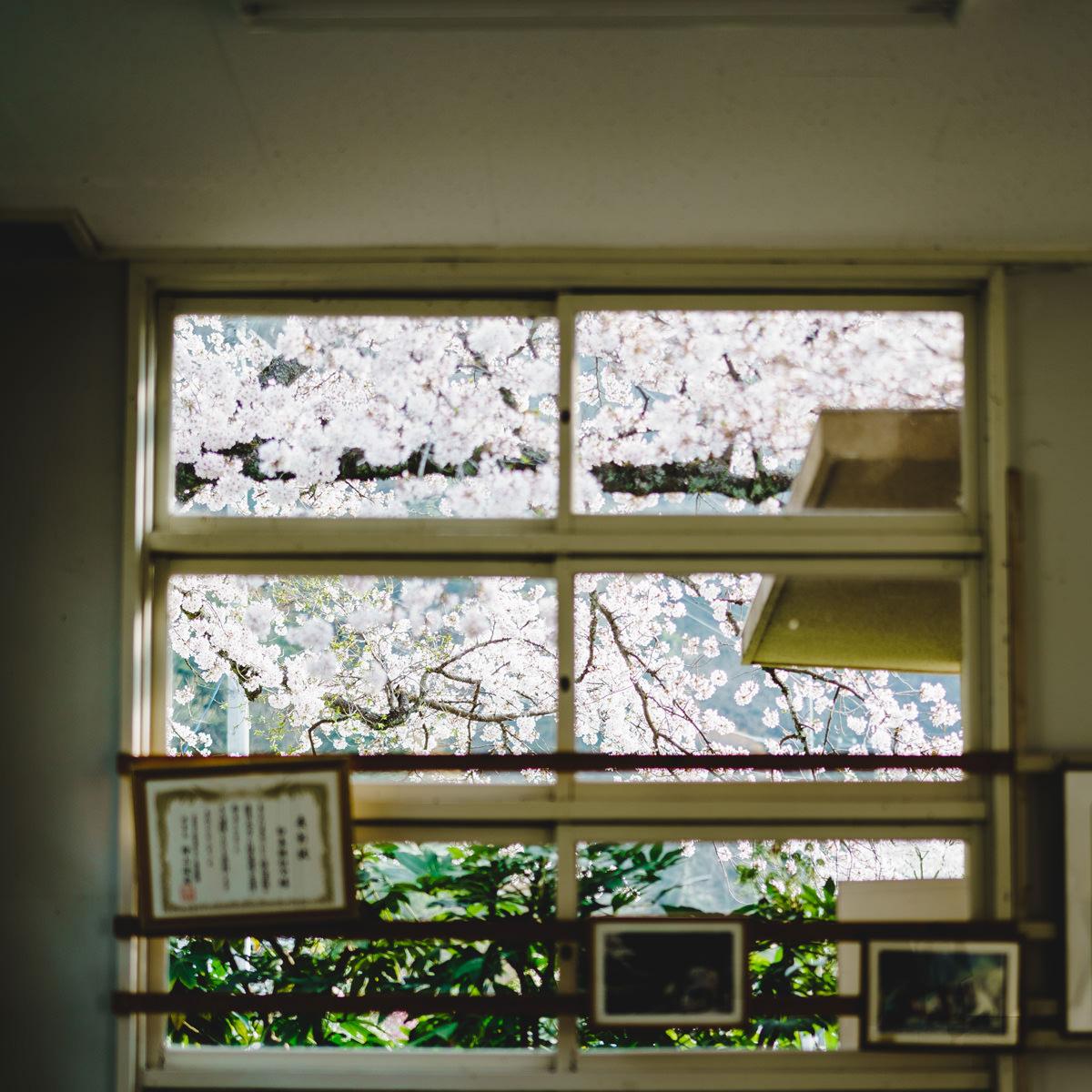 駅舎の窓と桜