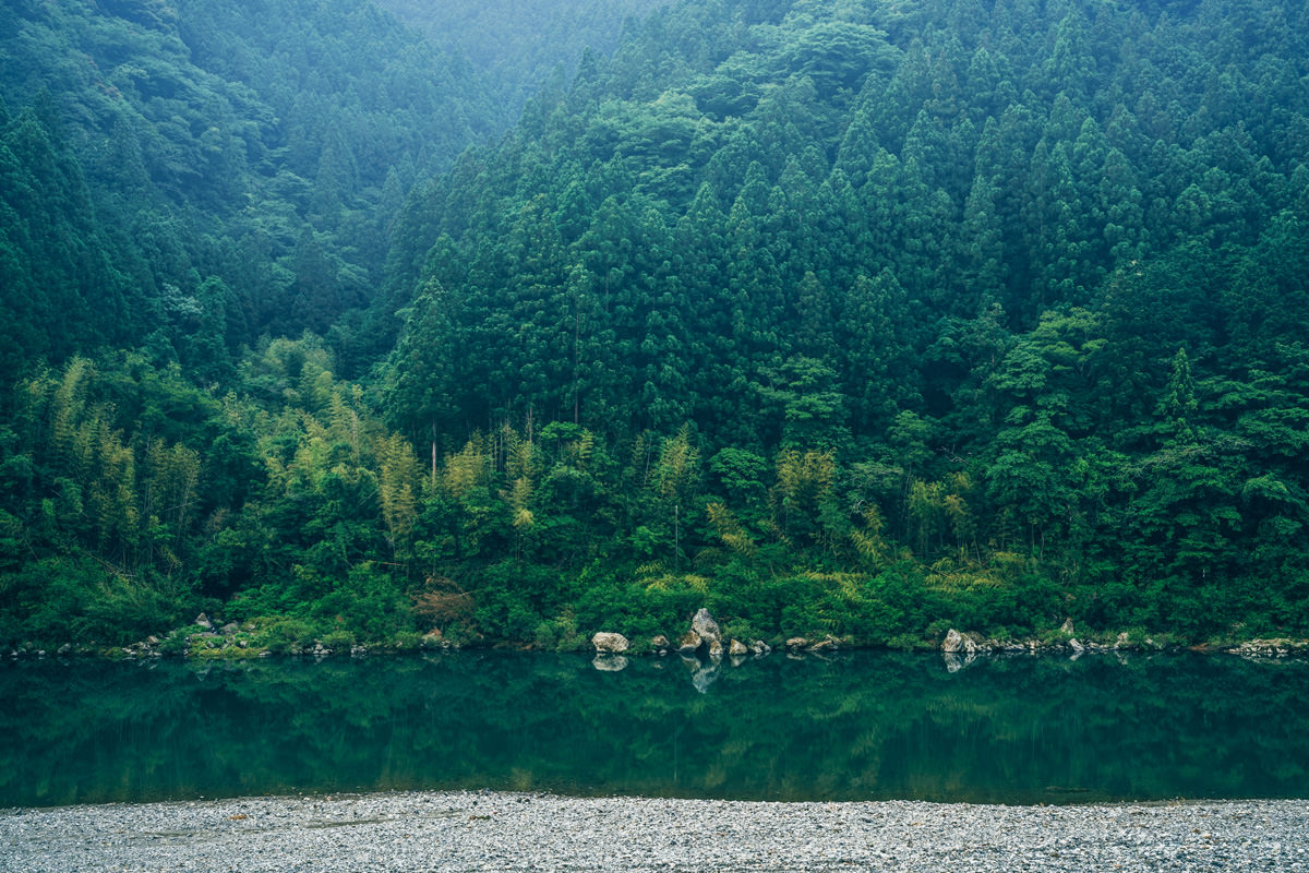 仁淀川と森